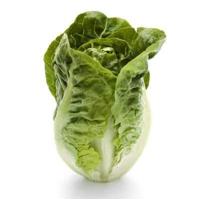 romaine salat paa hvid baggrund